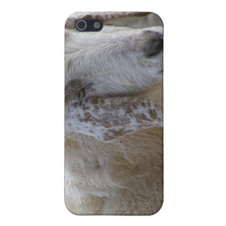 Goats face smiling! cover for iPhone SE/5/5s