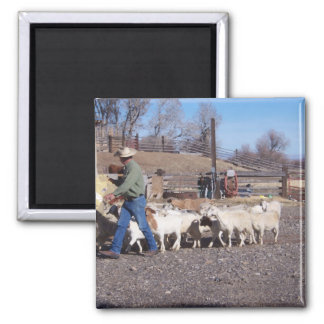 Goats follow the grain 2 inch square magnet