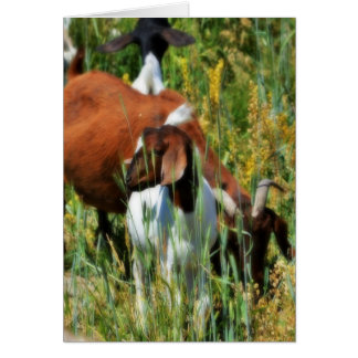 Goats in Pasture Greeting Card