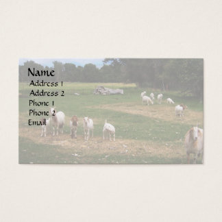 Goats in  Row Business Card