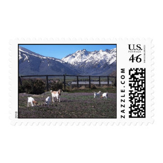 Goats in Rugy Mountain Pasture Postage Stamp
