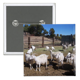 Goats in the padock pinback buttons