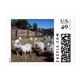 Goats in the padock postage stamp