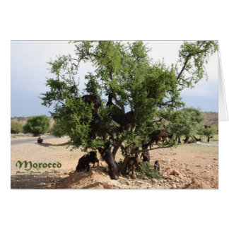 Goats in Trees - Argan Trees, Morocco Card