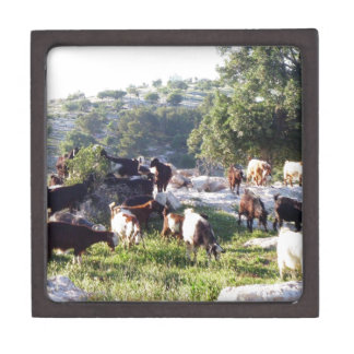 Goats Keepsake Box