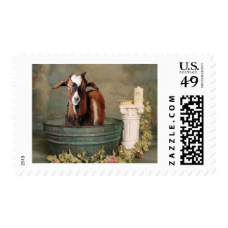 Goats need baths too stamp