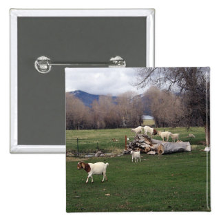 Goats On a Log Pinback Buttons