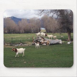 Goats On a Log Mousepads
