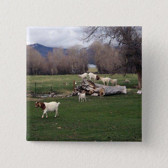 Goats On a Log Pinback Button