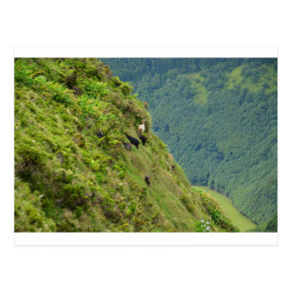 Goats on a very steep hillside post card