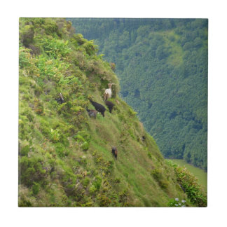 Goats on a very steep hillside small square tile