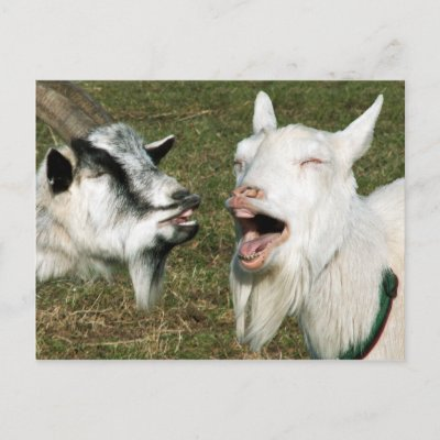 Una oración Goats_postcard-p239694942332653731qibm_400
