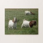 Goats Puzzle