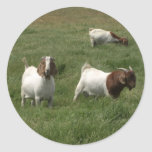 Goats Stickers
