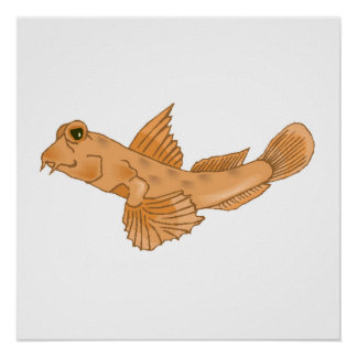 Goby Fish Posters