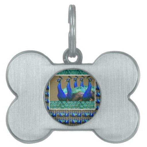Goce:  El pavo real n empluma gráficos del arte Placas Mascota
