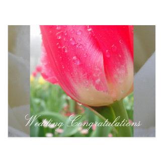 Gods Garden Postcard