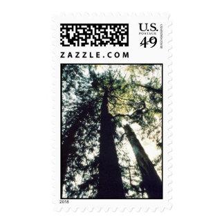 Godshawk Stamp