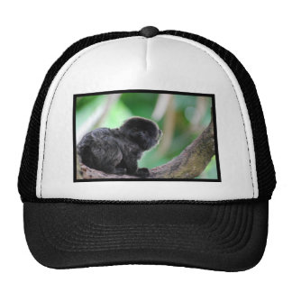 Goeldi's Marmoset Trucker Hat