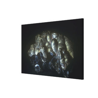 Goethite is an important ore of iron canvas print