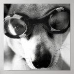 goggled encima de perrito impresiones