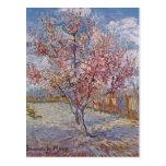 Gogh, reminiscencia de color de malva o de Vincent Tarjeta Postal