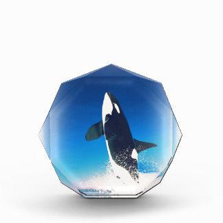 Going for the Breach Killer Whale Award