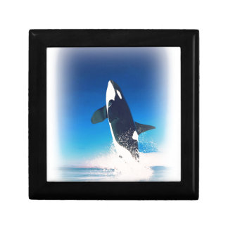 Going for the Breach Killer Whale Gift Box
