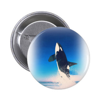 Going for the Breach Killer Whale Pinback Button