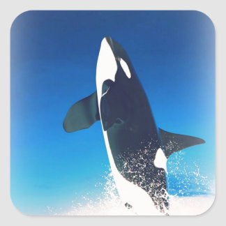 Going for the Breach Killer Whale Stickers