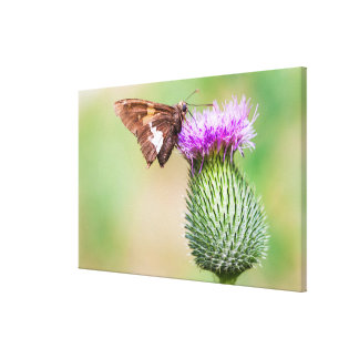 going horizontal on a vertical canvas print