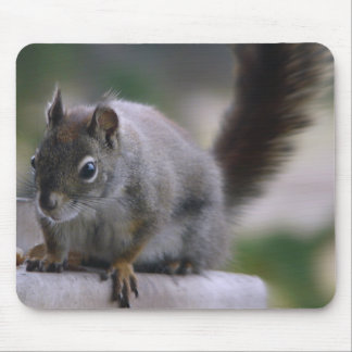 Going Squirrelly Mouse Pad