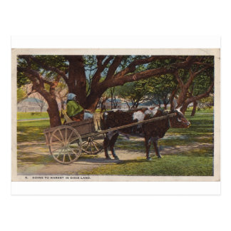 Going To Market In Dixie Land Postcard