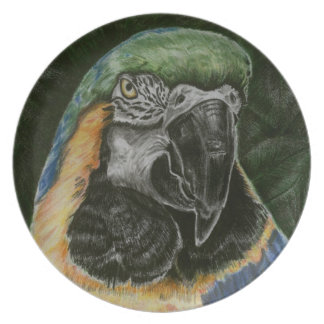 Gold and Blue Macaw plate