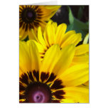 Gold and Brown Black Eyed Susan Greeting Card