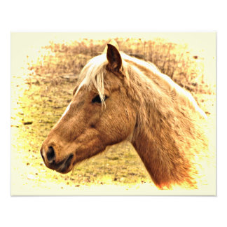 Gold and Brown Horse in Sun Animal Photo Print