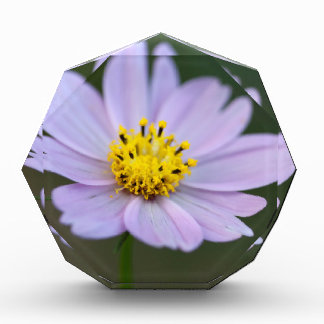 Gold and Lavender Cosmos Blossom Award