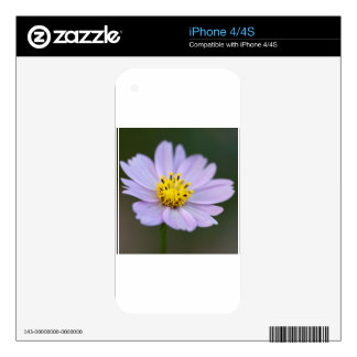 Gold and Lavender Cosmos Blossom iPhone 4S Decal