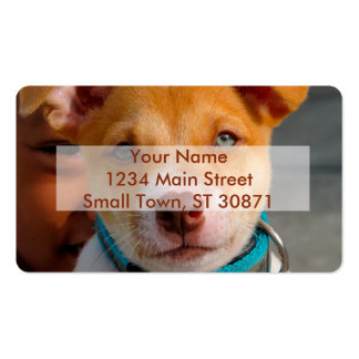 Gold and White Puppy Dog with Blue Collar Double-Sided Standard Business Cards (Pack Of 100)