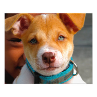 """Gold and White Puppy Dog with Blue Collar 4.5"""" X 5.6"""" Flyer"""
