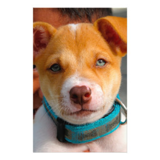 """Gold and White Puppy Dog with Blue Collar 5.5"""" X 8.5"""" Flyer"""