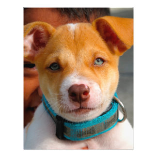 """Gold and White Puppy Dog with Blue Collar 8.5"""" X 11"""" Flyer"""