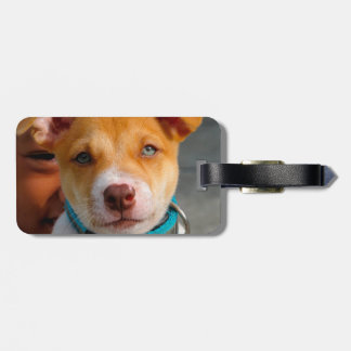 Gold and White Puppy Dog with Blue Collar Luggage Tag