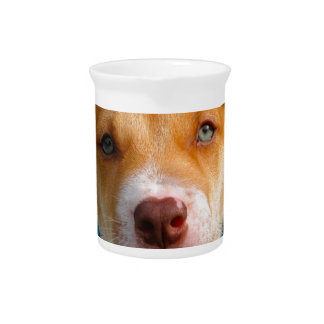 Gold and White Puppy Dog with Blue Collar Pitchers