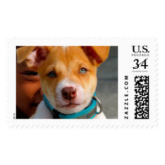 Gold and White Puppy Dog with Blue Collar Stamp