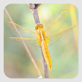 Gold and Yellow Colored Dragonfly Square Sticker