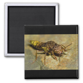 Gold & Brown Rove Beetle 2 Inch Square Magnet