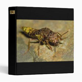 Gold & Brown Rove Beetle 3 Ring Binder