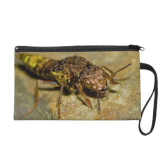 Gold Brown Rove Beetle Wristlet