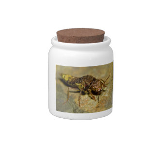 Gold & Brown Rove Beetle Candy Dishes